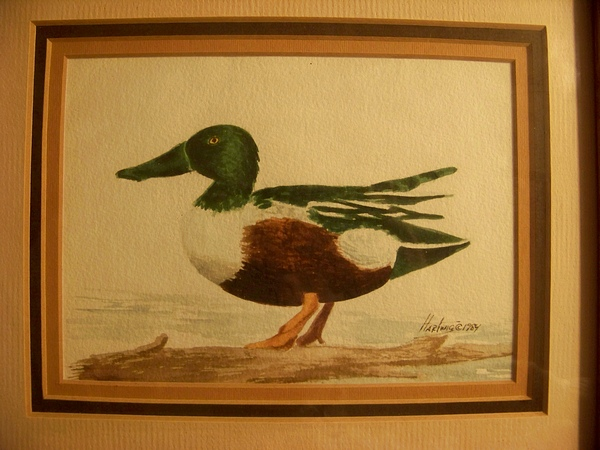 Hartwig 1984 Watercolor of Duck #2 Framed