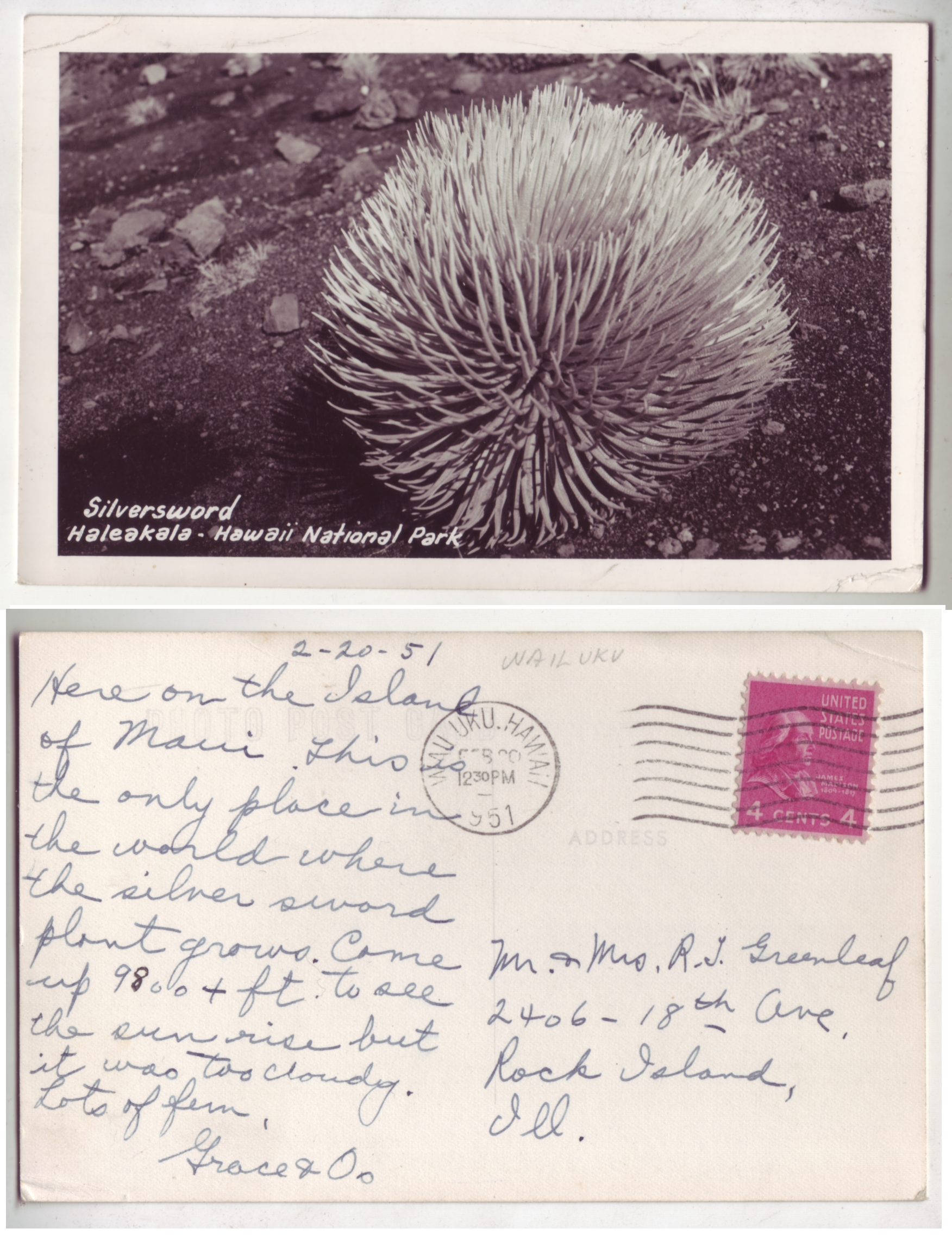 Hawaii 1951 RPPC Silversword Solo Franked 4c Prexie T.HI to USA