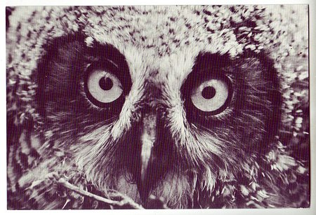 USA c1980 Owl Thisby Photograph Albany, CA Unused PC